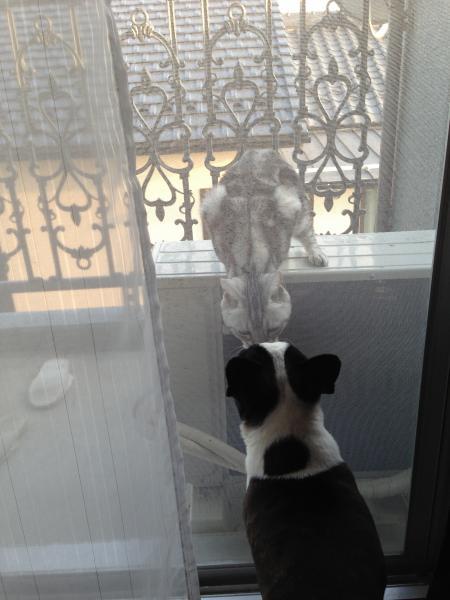 犬と猫のラブシーンに癒されました