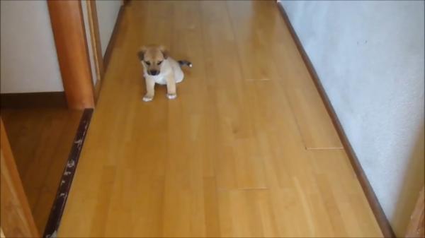壁が好き!子犬編